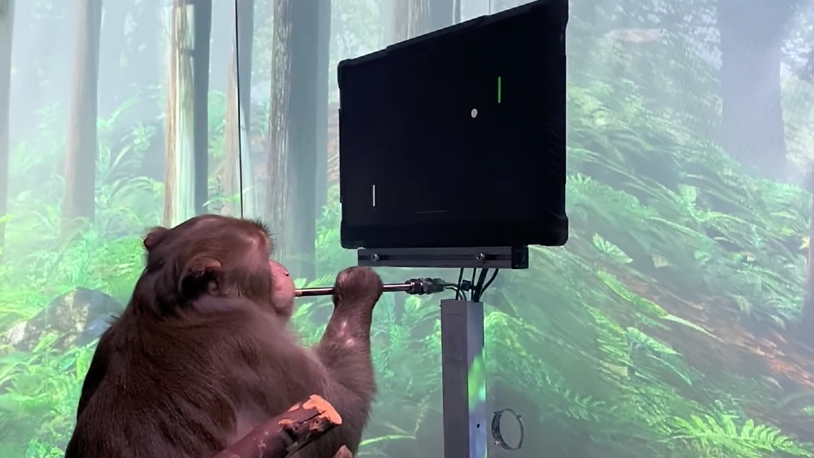 Elon Musk's brain implant firm teaches monkey to play Pong with its mind