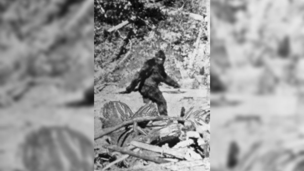 Is Bigfoot real? You likely already know the answer