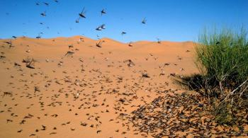 Army aircrafts supported operations to eliminate desert locusts