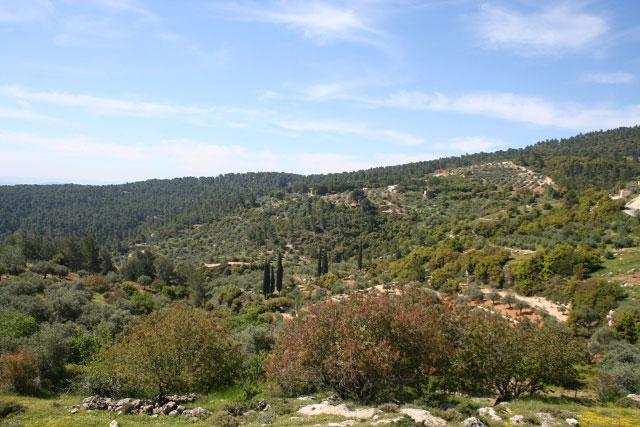 Arbor Day in Jordan