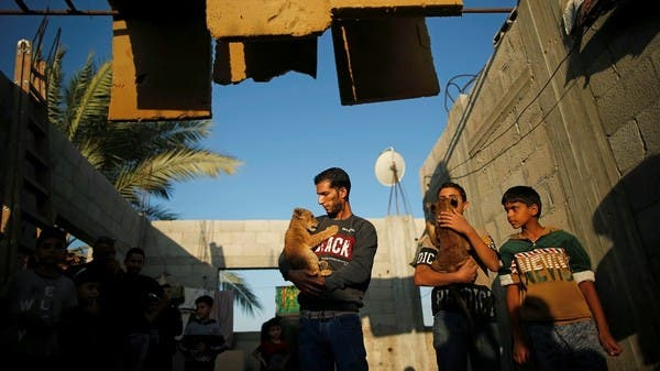 Palestinian baker keeps lion cubs on Gaza rooftop