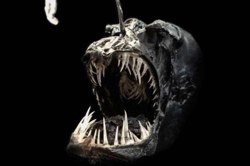Horror deep-sea creatures preserved by taxidermist including 1-metre bloodsucking leech