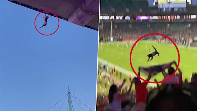Cat-astrophe averted as fans catch falling feline using flag at American football game