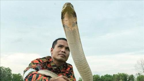 Famed 'snake whisperer' dies after cobra bite